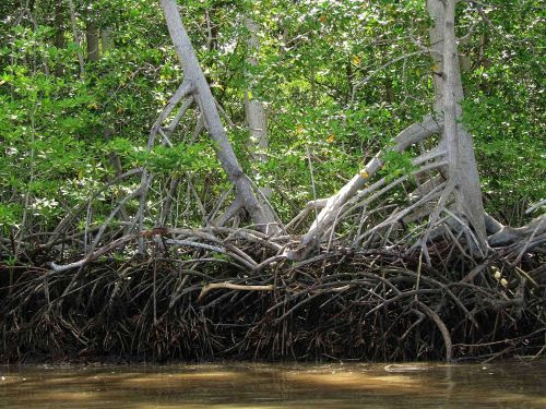 Lugares turísticos del Ecuador: Los mejores manglares de América del sur.