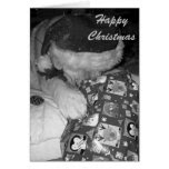 Cute akita dog with christmas gift christmas greeting card