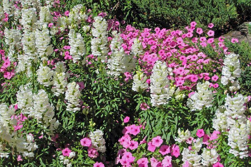 Garvin Woodland Gardens 20