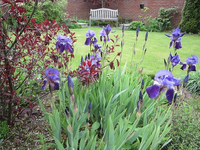 May garden 2013 012