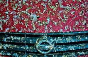 bird-poop-car-jpg_144307