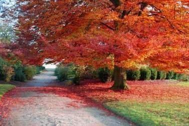 acero autunno.jpg