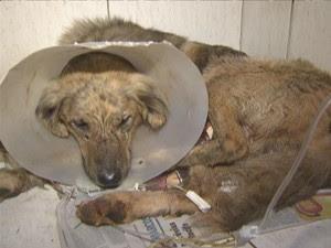 Cachorro foi levado para clínica veterinária, onde passará por cirurgia (Foto: TV Globo/ Reprodução)