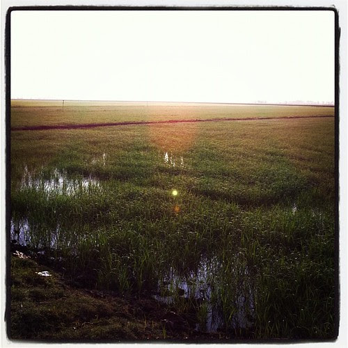 Paddy field bathed in morning sunlight