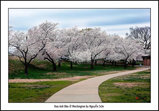 012 Mùa Xuân Washington