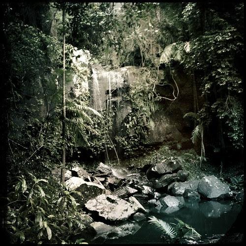 Gold Coast Rain Forest