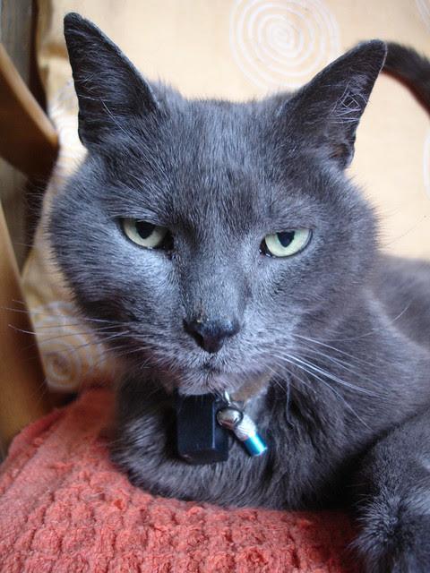 Henrycat (2)