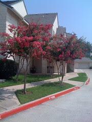 Flowering Trees in the Neighborhood