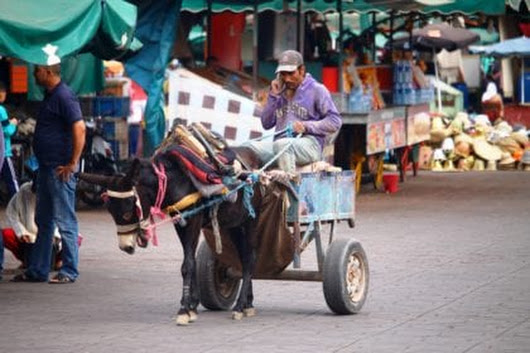 Top things to do in Marrakech - Earths Pilgrim