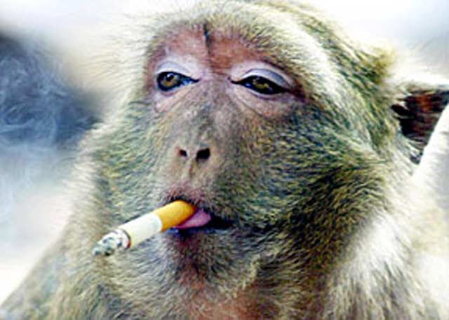 http://ikhwanabdillah.files.wordpress.com/2009/04/having_a_smoke.jpg