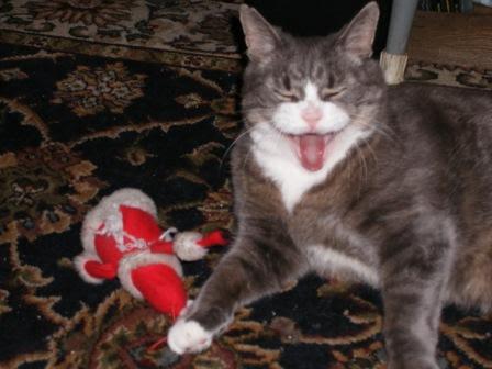 katley finds his Santa