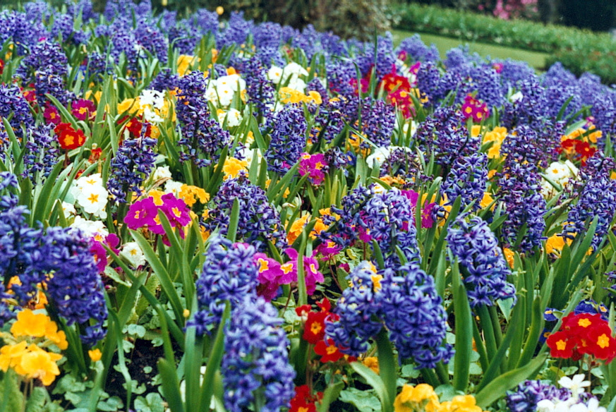 Image result for beautiful flower in Spring