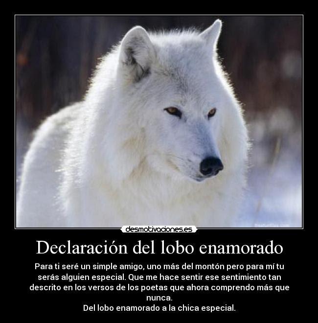 Declaracion Del Lobo Enamorado Desmotivaciones