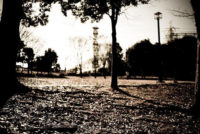 My neighborhood snap - Distagon25