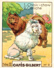 gilbert chiens012