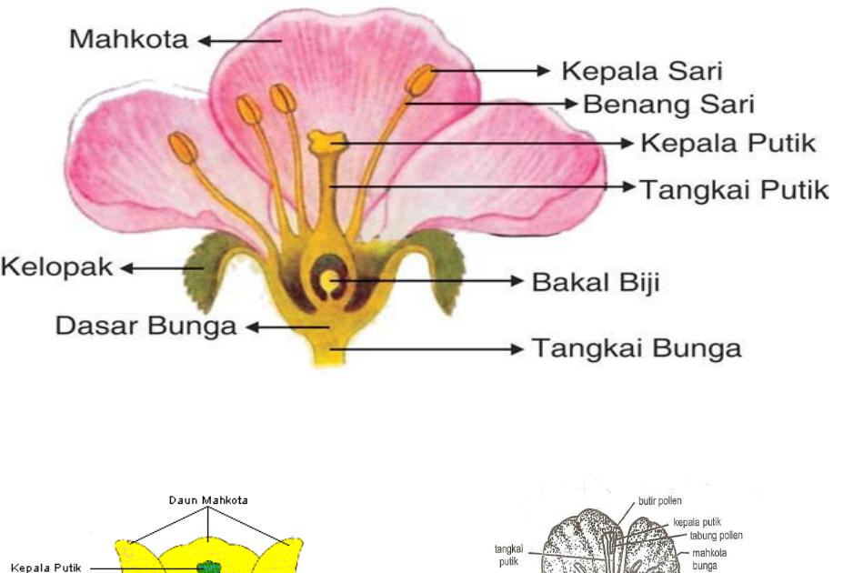 Gambar Bunga Dan Bagiannya Guru Galeri