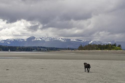 goose spit, low tide