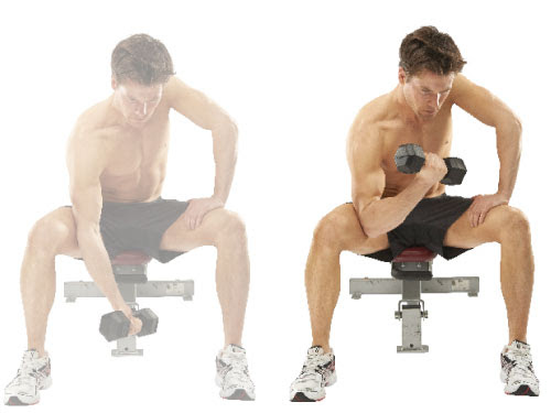 The Ultimate Upper Body Dumbbell Workout