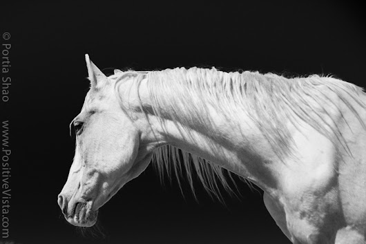 Photographing horses - Positive Vista Photography & Art