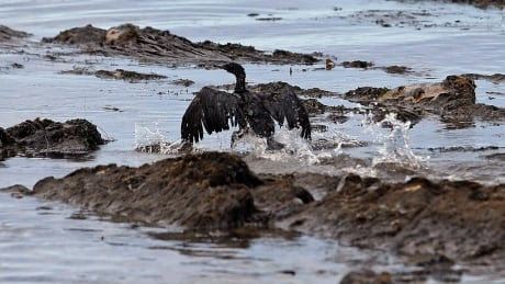 California pipeline spill came despite Texas firm's assurances