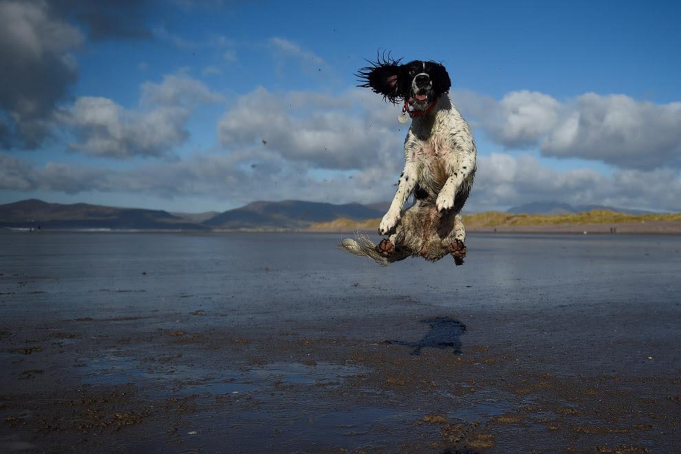 Собака в стрибку