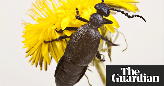 Where have all our insects gone? | Environment | The Guardian