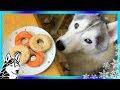 Les chiens peuvent manger des beignets