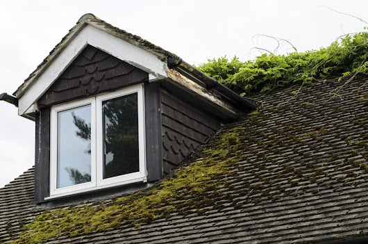 How to Prevent Moss From Growing On Your Roof | The Roof Doctor