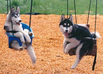 dois cachorros conversam no balanço