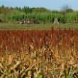 FAO - News Article: Genetic diversity a hidden tool in coping with climate change