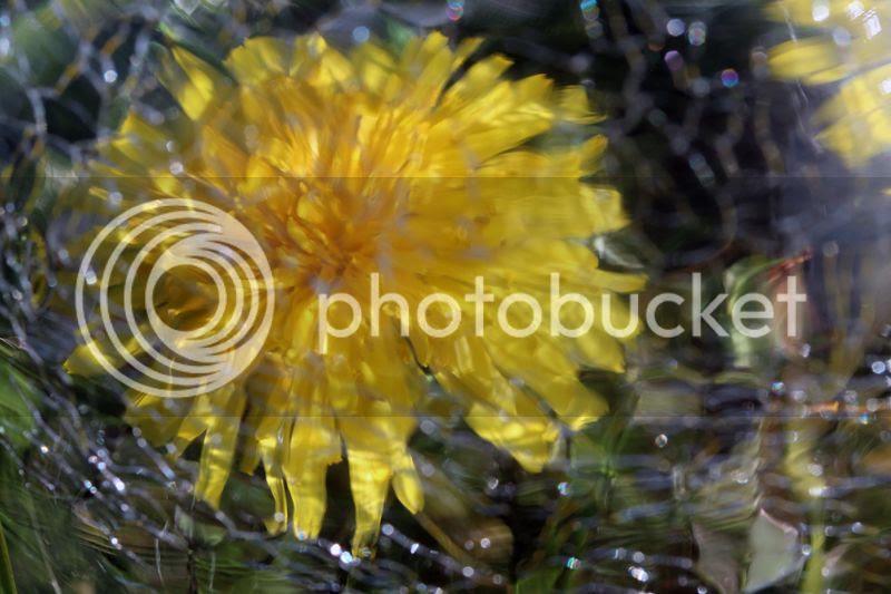 photo 1802IMG_3741_zps310cb8e9.jpg