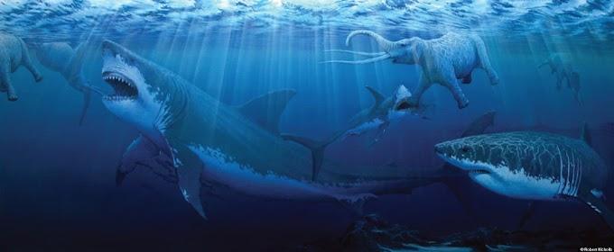 Encuentran fósiles de Megalodón en las costas Canarias