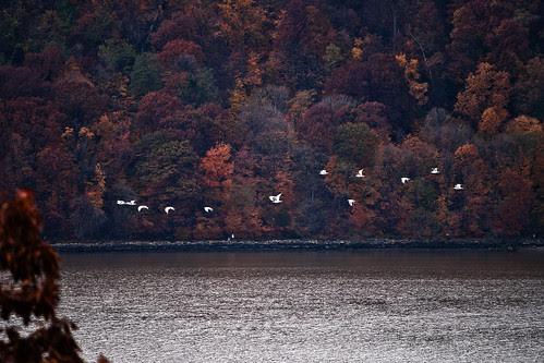 Birds Along the Hudson