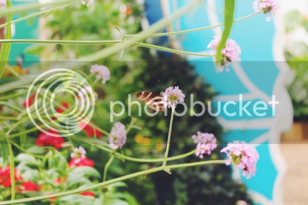 photo 991514A7-DA1D-40A5-839A-1FA6BF05EDE9.jpg