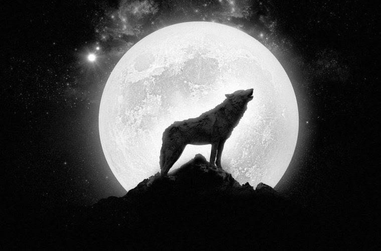 Lobo Aullando Luna Llucia Doula Mallorca