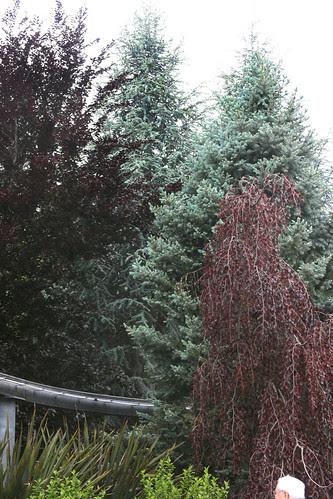 tree combo