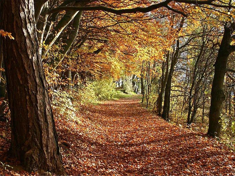 File:Herbst.jpg