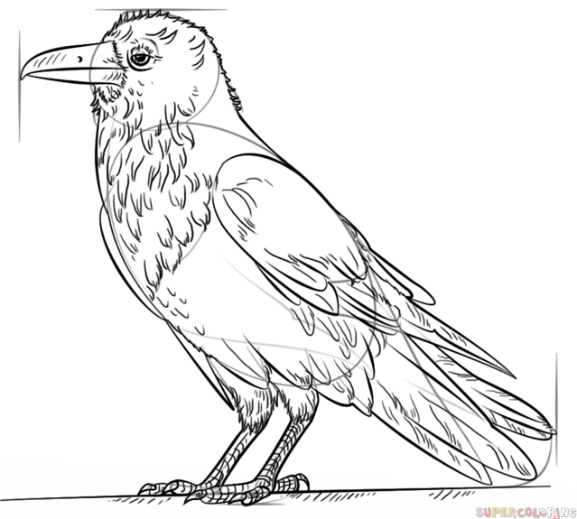 raven 7 how to draw