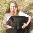 Potbellied Pigs: The New Therapy Animals