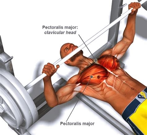 guide  perfect barbell bench press technique
