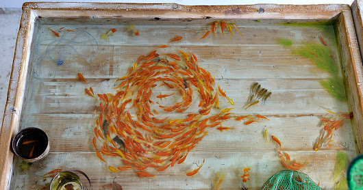 Riusuke Fukahori's Lifelike Goldfish Painted in Acrylic Between Layers of Resin