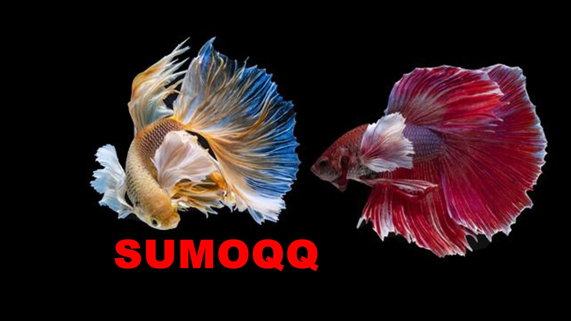 Unduh 8000 Wallpaper Bergerak Ikan Cupang  Paling Baru