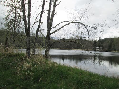 Lake along Longbell Rd (I think)