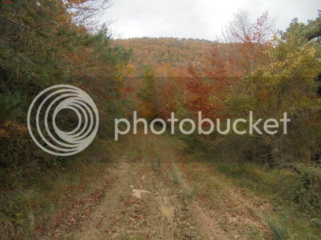 photo NARVAL - VUELTA OSTIASKO SCALPEL 24-10-15 043_zpsrfkfnfu7.jpg