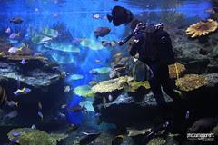 siam aquarium fish feeding