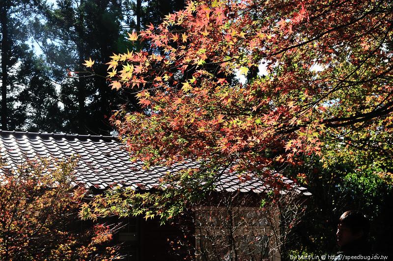 福壽山農場楓紅-44