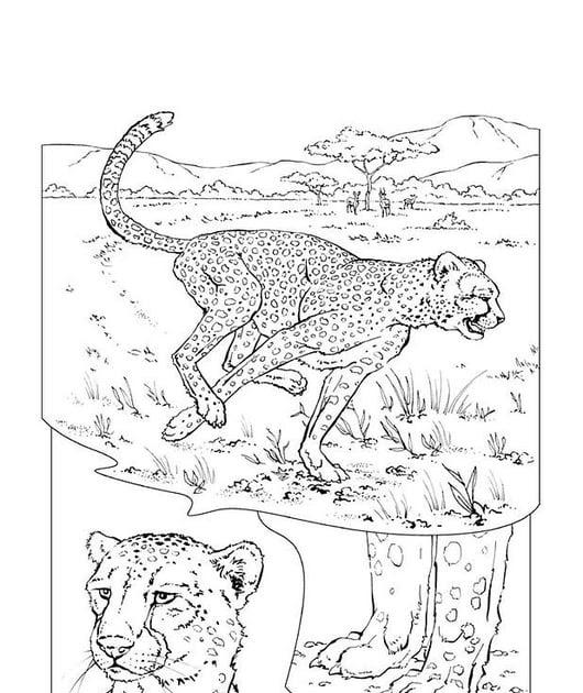 ausmalbilder leopard ausdrucken