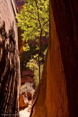 Tree in gap