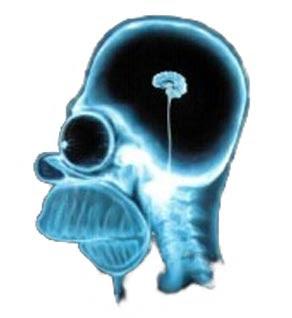 cervello di Homer Simpson