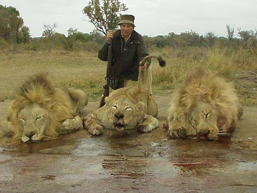 Carte Blanche expose on canned lions